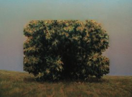 'Landscape with bush II (Dimensions of mass reduction)'
